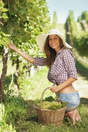 포도원 젊은 농부 여자 스톡 콘텐츠