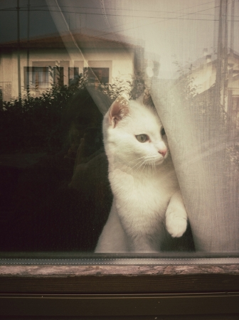 otganimalpets01: White cat looking out