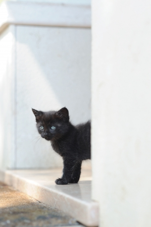 observant: a black kitten looks out for the first time on the backyard