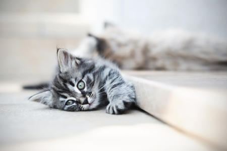 doorstep: cute cats suffering from the heat, and lying on the doorstep