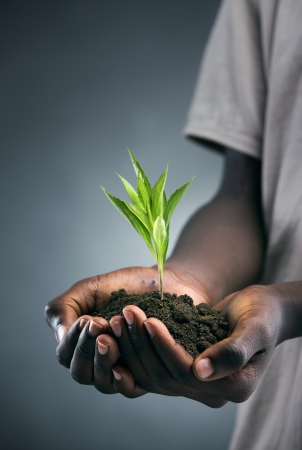 African boy with seedling in his hands photo
