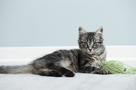 Kitten playing with a ball of wool on floor