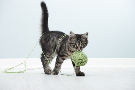 gato jugando: Gatito jugando con un ovillo de lana en el suelo