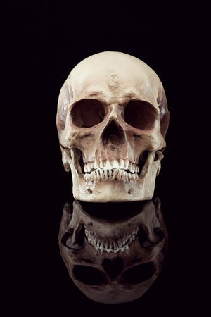 skull background: Natural human skull front view on black background. Stock Photo