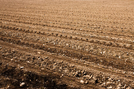 furrows: Freshly ploughed fertile field with furrows and rows.