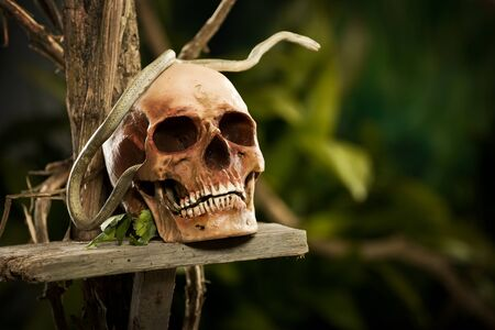 snake head: Old ruined skull with snake and wild jungle in the background. Stock Photo