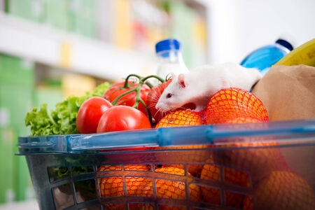 shopping binge: Cute white mouse sniffing fresh vegetables in a shopping basket at supermarket.
