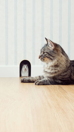 mouse hole: Mouse peeking out his hole on the wall with beautiful cat waiting outside. Stock Photo