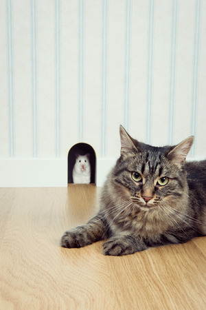 mouse hole: Mouse peeking out his hole and beautiful cat waiting outside lying on the floor. Stock Photo