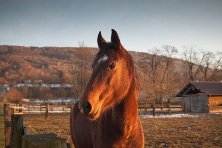 breeding ground: Beautiful horse grazing at sunset with sunlight and farm on background