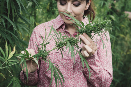 Beautiful young woman in a hemp field holding a hemp plant stem
