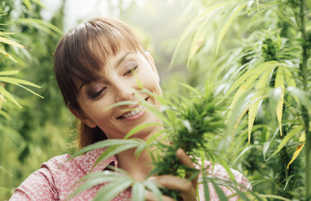 marijuana: Young smiling woman in a hemp field checking plants and flowers, agriculture and nature concept