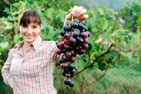 Happy female farmer in the vineyard holding grapes and smiling at camera