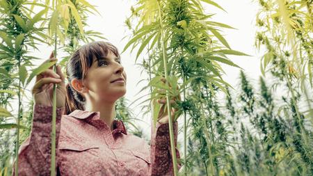 Smiling young woman in a hemp garden touching plants Stock Photo
