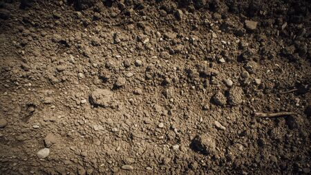 humus soil: Fertile humus soil in the farmland field, texture close up