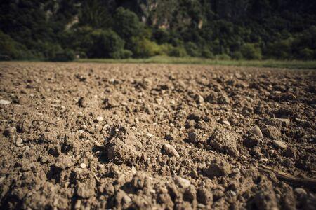 humus soil: Fertile humus soil in the farmland field, woods and green vegetation on background Stock Photo