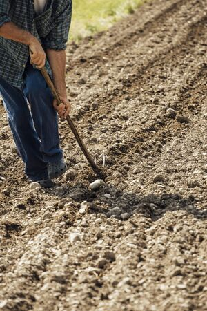hoeing: Farmer tilling and hoeing the fertile soil with a hoe during a sunny summer day
