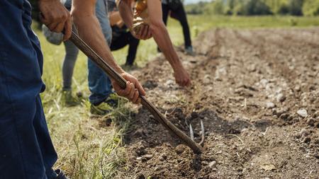 여름 화창한 날 동안 비옥 한 토양을 갈고 닦고있는 들판에서 일하는 농부들 스톡 콘텐츠
