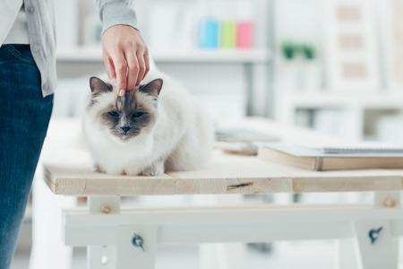 배경에 테이블에 그녀의 사랑스러운의 Birman 고양이를 애무 집에서 여자 룸 인테리어