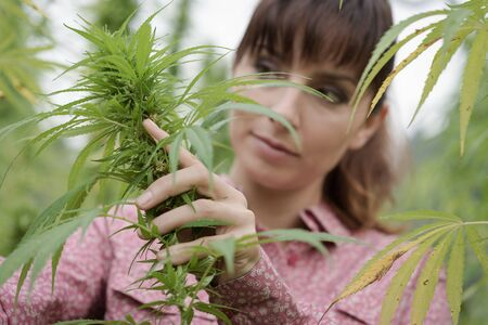 woman in field: Young woman in a hemp field checking plants and flowers, agriculture and nature concept