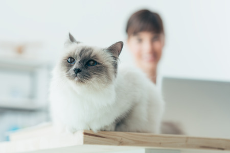 Lovely soft cat posing on a desktop, a woman is working with a laptop on background, selective focus