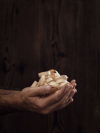 Carpenter holding wood shavings in his hands: woodworking and craftsmanship concept