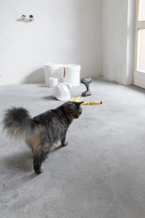 Cute long hair cat exploring an under contruction room at home