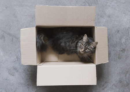 Cute long hair cat playing in a cardboard box on the floor Stock Photo - 108578226