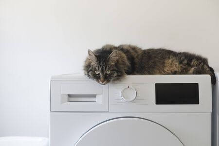 Cute cat lying down on the washing machine at home and looking at camera