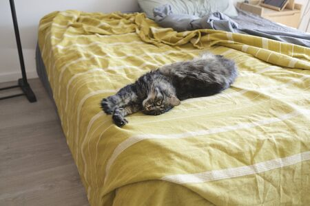 Lovely cat lying on the bed and stretching paws, pet lifestyle concept