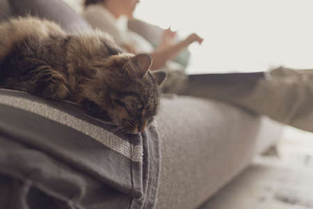 Lovely cat lying down on the couch at home and resting next to its owner
