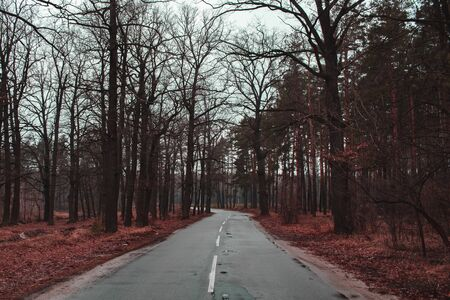 The road passing through the forest. Gray, dark forest