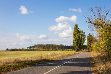 Field after harvest. Pine forest on the horizon. The road passing along the field. Blue sky.