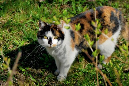 Calico cat on grass Stock Photo