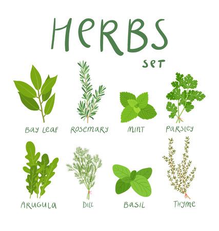 Set of 8 vector herbs Vettoriali