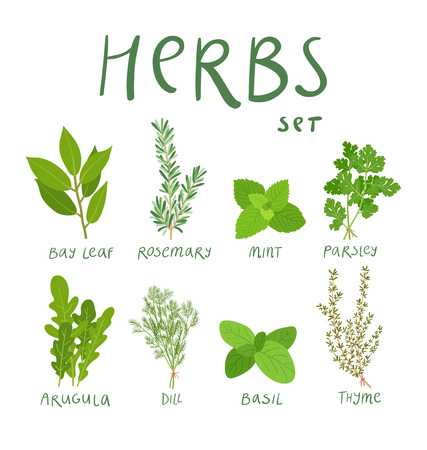 Set of 8 vector herbs Çizim
