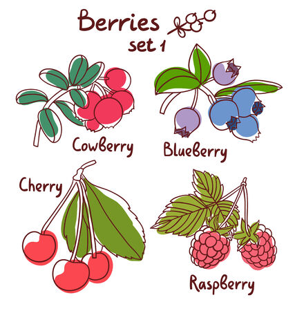 Raspberry, blueberry, cherry and cowberry berries set 1 Vector