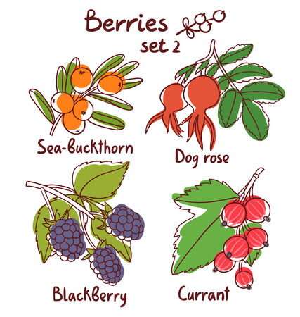 buckthorn: Sea buckthorn, dog rose, blackberry and currant berries set 2