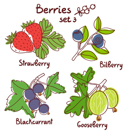bilberry: Black currant, strawberry, bilberry and gooseberry berries set 3 Illustration