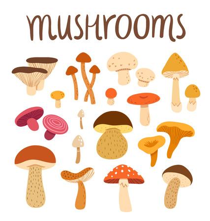 Different types of mushrooms set