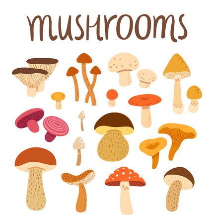 Different types of mushrooms set