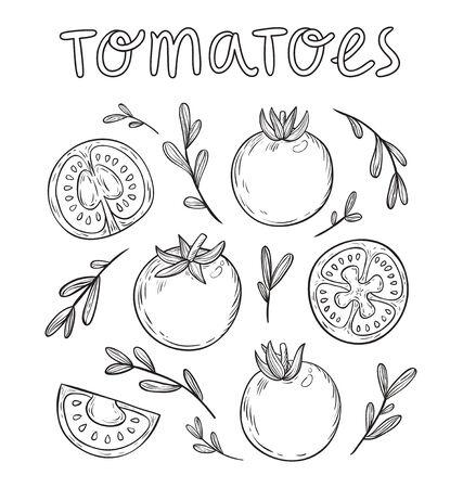 comidas saludables: Colección drenada tomates bosquejados mano Vectores