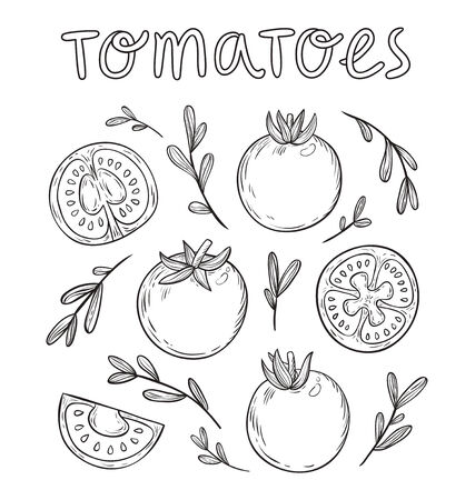 healthy meals: Sketched tomatoes hand drawn collection Illustration