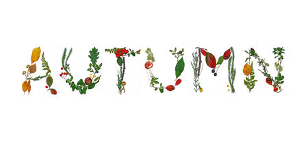 Autumn word from floral lettering  photo