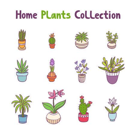 cactus flower: Collection of 12 home plants Illustration
