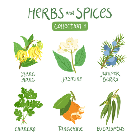 ayurveda: Herbs and spices collection 1. For essential oils, ayurvedic medicine