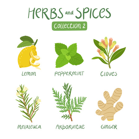 Herbs and spices collection 2. For essential oils, ayurvedic medicine Banco de Imagens - 44519936