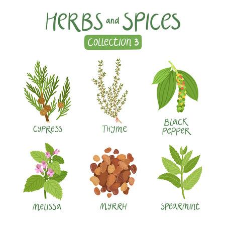 Kruiden en specerijen collectie 3. Voor essentiële oliën, ayurvedische geneeskunde Stockfoto - 44519935