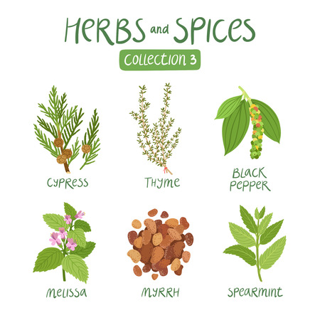 Herbs and spices collection 3. For essential oils, ayurvedic medicine Illustration