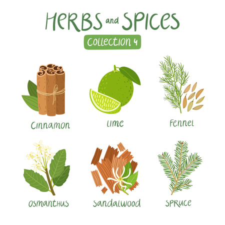 green herbs: erbs and spices collection 4. For essential oils, ayurvedic medicine Illustration
